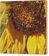 Sunflower With Ladybug Wood Print