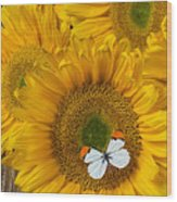 Sunflower With White Butterfly Wood Print