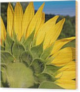 Sunflower1253 Wood Print