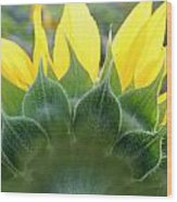 Sunflower1261 Square Wood Print