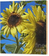 Sunflowers Abound Wood Print