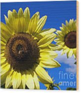 Sunflowers Against A Blue Sky Wood Print
