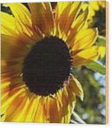 Sunflowers Alive And Free Wood Print