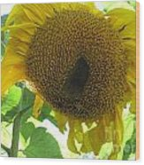 Sunflowers Bee Alaska Wood Print by Elizabeth Stedman