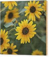 Sunflowers Bloom Wood Print