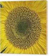 Sunflower's Cluster Wood Print