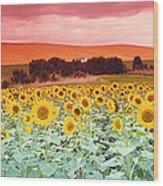 Sunflowers, Corbada, Spain Wood Print