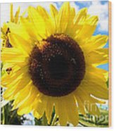 Sunflowers Feeding The Hive Wood Print