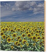 Sunflowers Forever Wood Print