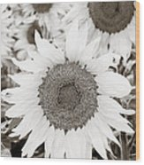 Sunflowers In Back And White Wood Print