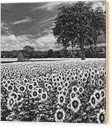 Sunflowers In Black And White Wood Print
