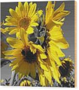 Yellow Selected Sunflowers Wood Print