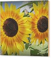 Sunflowers In Full Bloom Wood Print