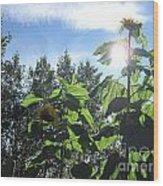Sunflowers In Sunshine Wood Print by Elizabeth Stedman