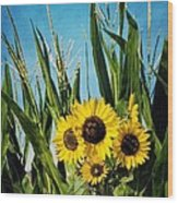 Sunflowers In The Corn Field Wood Print