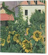 Sunflowers In The Garden At Petit Gennevilliers  Wood Print