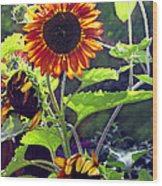 Sunflowers In The Park Wood Print