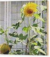 Sunflowers In The Window Wood Print