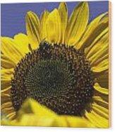 Sunflowers Wood Print by John Holloway