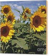 Sunflowers Wood Print by Kerri Mortenson