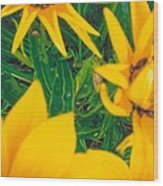 Sunflowers Medley Wood Print by Robert Bray