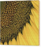 Sunflowers Of Summer Wood Print