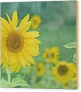 Sunflowers Vintage Dreams Wood Print