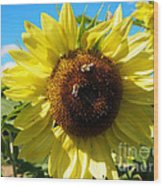 Sunflowers With Bees Harvesting Pollen Wood Print
