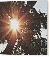 Sunhine And Raindrops Wood Print