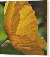 Sunkissed Poppy Wood Print