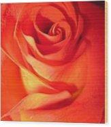 Sunkissed Orange Rose 10 Wood Print