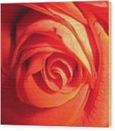 Sunkissed Orange Rose 11 Wood Print
