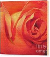 Sunkissed Orange Rose 6 Wood Print