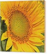 Sunkissed Sunflower Wood Print