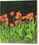Sunkissed Tulip Garden Wood Print