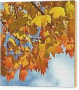 Sunlight And Shadow - Autumn Leaves Two Wood Print