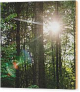 Sunlight Forest Wood Print