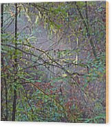 Sunlight Highlights In Armstrong Redwoods State Preserve Near Guerneville-ca Wood Print