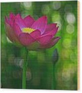 Sunlight On Lotus Flower Wood Print