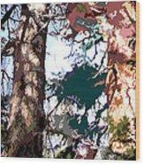 Sunlight on Pine Trees Wood Print