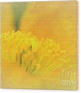 Sunlight On Poppy Abstract Wood Print