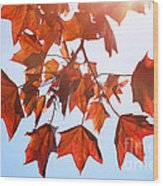 Sunlight On Red Leaves Wood Print