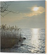 Sunlight On The Lake With Pampas Grass Wood Print