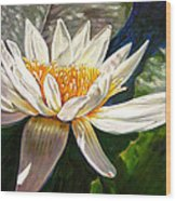 Sunlight On White Lily Wood Print