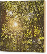 Sunlight Shining Through A Forest Canopy Wood Print