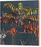 Sunlight Stars On Sumac Wood Print