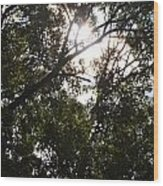Sunlight Through Branches I Wood Print