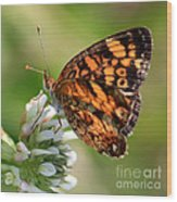 Sunlight Through Butterfly Wings Wood Print