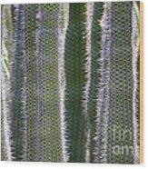 Sunlight Through Cacti Wood Print