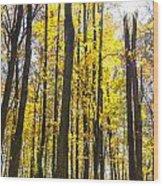 Sunburst Through Trees Wood Print